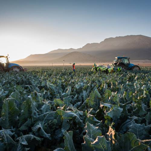 Traceability: what is it and how does it affect the vegetables you eat?